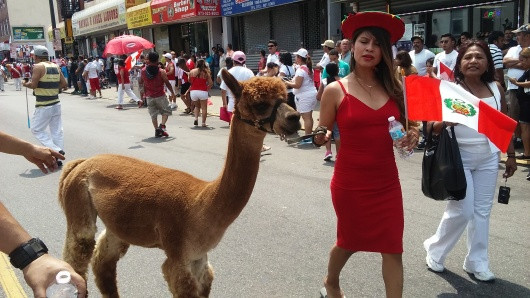 La Vicuña, uno de los símbolos en el Escudo Nacional del Perú, paseó altiva por las calles de Paterson.